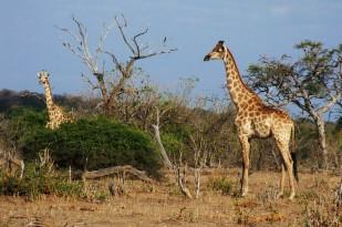 Chobe National Park, Botswana. By Siel