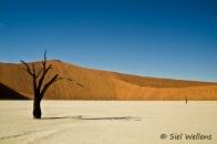 Namib desert - Dead Vlei