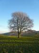 At Calton hill
