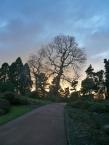 Sunset at the Botanic Garden