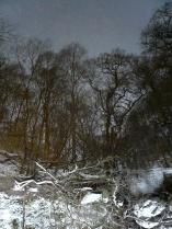 Tree reflections, Loch Katrine