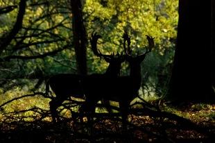 Mystical Forest, Denmark ©Siel Wellens