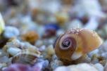 Sand of shells (II)