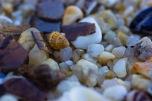 Sand of shells (I)