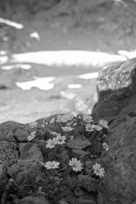 Among rocks and ice
