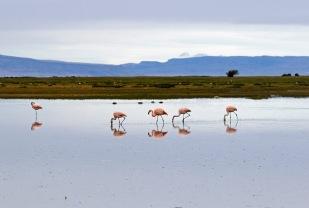 Flamingos at Laguna Nimez Reserve
